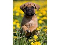 Dogsitters Needed - Blackpool/Preston