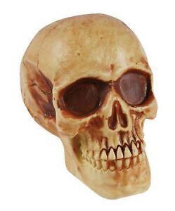 plastic halloween skulls - Halloween Skull