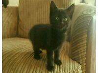 kitten's for sale 2 left