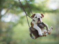 BABYSITTER AVAILABLE/DOG SITTER