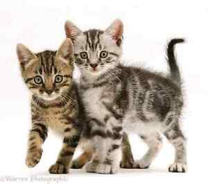 Wanting: Kittens to buy or giveaway Stafford Brisbane North West Preview