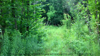 Forest Property for Sale Near Small Beach