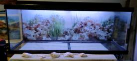 Large aquarium with light