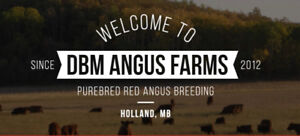 DBM Angus Farms Bulls