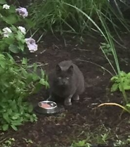 Grey cat near Point Pleasant Park