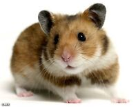 Wanted hamster