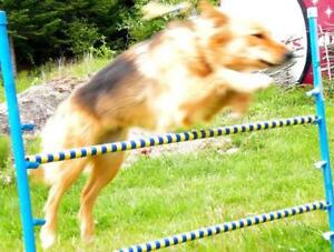 ADDING A 2ND PRE-AGILITY CLASS, sunday 22nd October