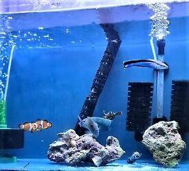 marine fish (salt water fish)