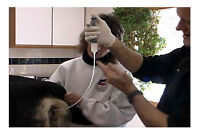 ARTIFICIAL INSEMINATION SERVICE FOR DOGS