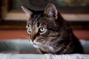 Lost Cat - Dunham/Mona