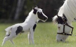 LOOKING for horse or small pony