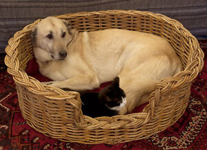 wicker or rattan dog basket, extra large