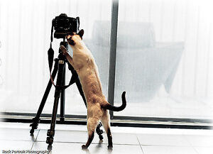 VOLUNTEER PHOTOGRAPHER FOR CAT RESCUE...MUST LOVE CATS London Ontario image 2