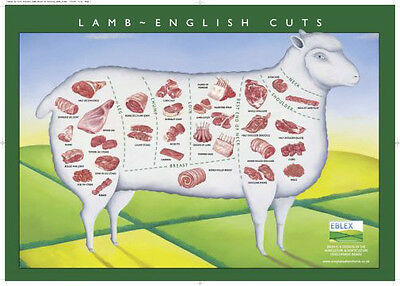 European Lamb Cuts Illustration Chart poster 24in x 36in Meat Butcher