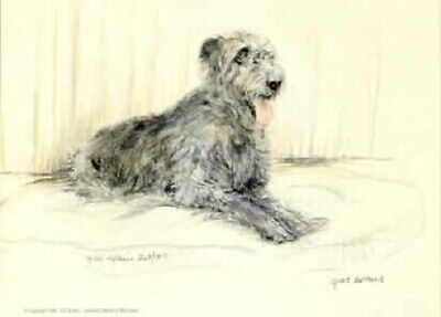 Tibetan Terrier Thank You FROM THE DOG 8 x 10 Picture//10x8 Print Novelty Gift