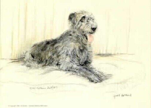 Irish Wolfhound Limited Edition Art Print by UK Artist Gill Evans*