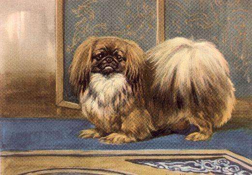 Pekingese - Dog Art Print - Megargee MATTED
