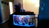 47 gallon bowed fish tank with stand