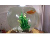 Biorb Fish Aquarium 30 litre with one beautiful Goldfish