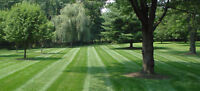 Fall Clean Up + Lawn Care