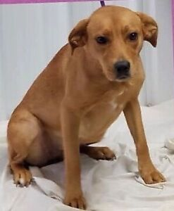 Adopt Dogs & Puppies Locally in Hamilton | Pets | Kijiji Classifieds