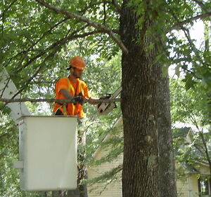 Spring Residential Tree Trimming (home care) Windsor Region Ontario image 2