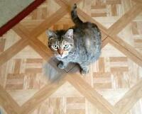 """Adult Female Cat - Torbie: """"Casey"""""""