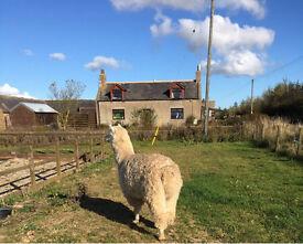Farmhouse - Near Cruden Bay