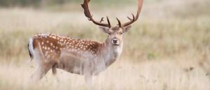 Hunting Tours Canberra