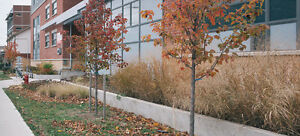 BEST LOCATION - SINGLE ROOMS - STUDENT HOUSING Kitchener / Waterloo Kitchener Area image 7