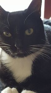 BRADY! Available to adopt Riley's Legacy Cat Rescue!