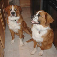 Looking for the breeder of a dog that I bought 3 years ago