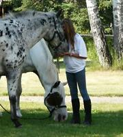 Get Happy on a Horse! Girls Summer Horsecamps
