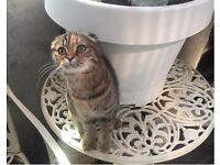 Rare kitten