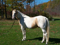 Horse back riding lessons/ camps/ Programs and more.