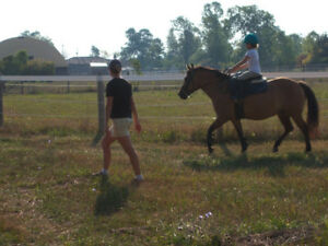 Horse back riding camps and programs.