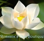Rossana's Chic Boutique