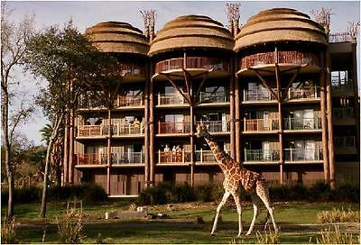 DISNEY Animal Kingdom Resort Disney World Vacation Rental