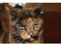 Lost - Gwyn our tortoiseshell cat. Last seen two months ago and she has not returned.