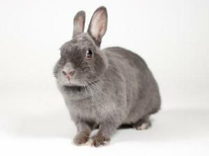"Young Female Rabbit - Dwarf: ""Audrey"""