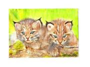 Bobcat Paint