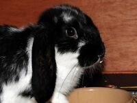 FREE TO GOOD HOME 2 RABBITS WITH HUTCH