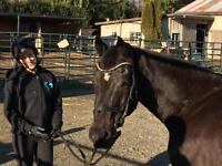 "Adult Male Horse - Thoroughbred: ""Arkhill"""