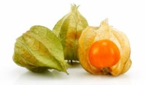 Cape gooseberry - ground cherry Ferntree Gully Knox Area Preview