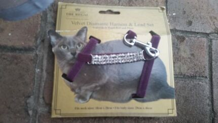 Cat puppy  chihuahua bling harness and lead REDUCED Beverly Hills Hurstville Area Preview