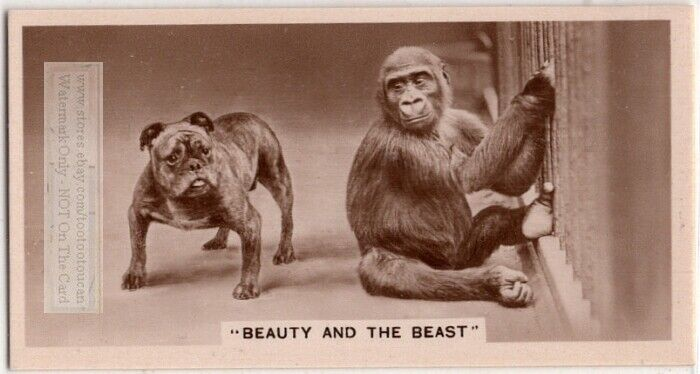 Bull Dog And Gorilla Together 1930s Trade Ad Card