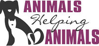 Daily Dog Walks And Let Outs With Animals Helping Animals