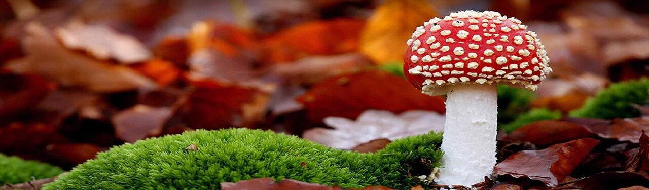 Under_A_Mushroom