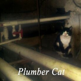 All plumbing and handyman jobs kitchen drainage cleaning toilet saniflow fixing heating fixings