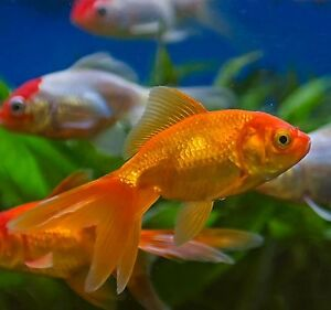 I am looking for a fish tank 60 gallon or more please